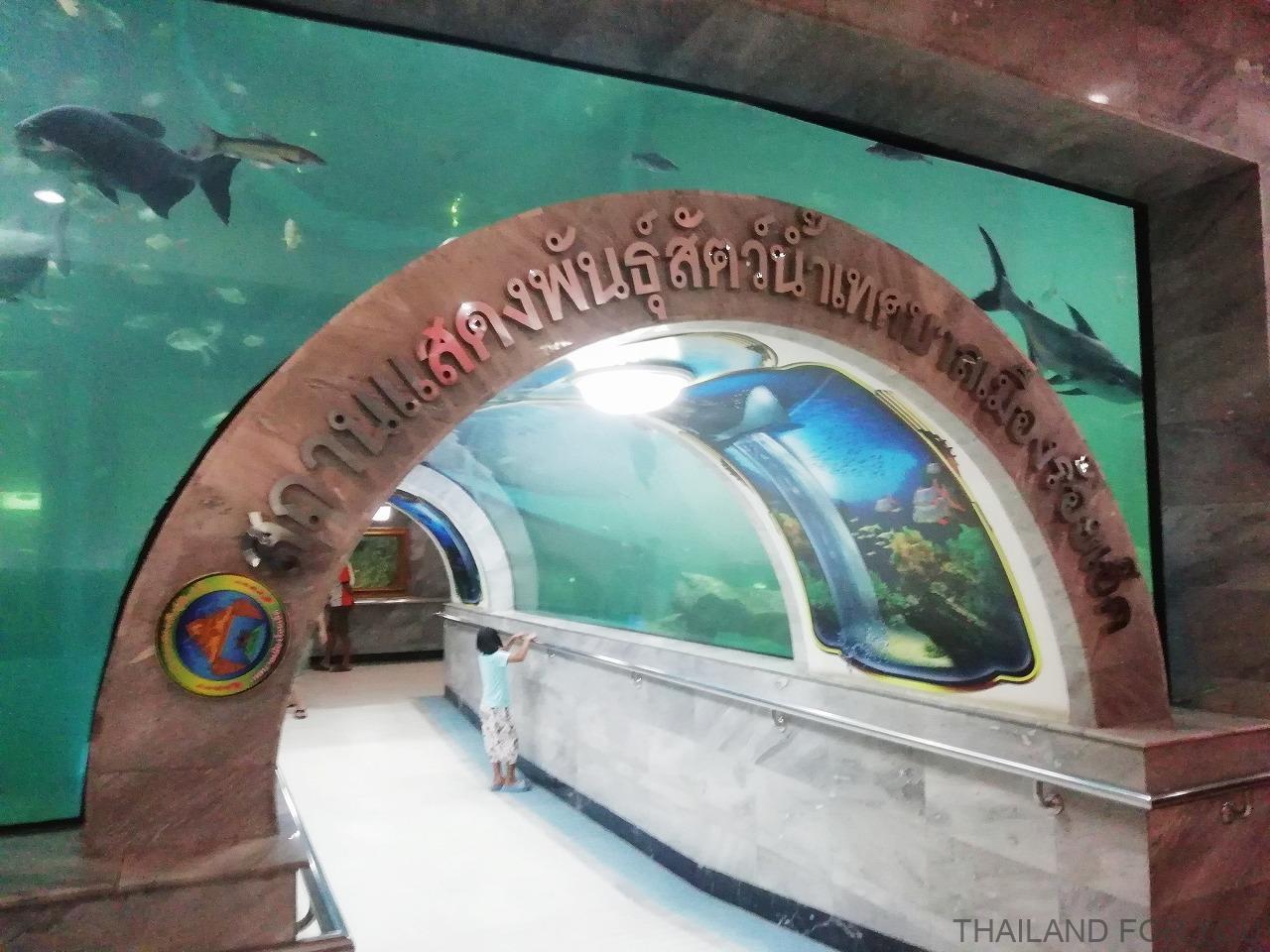 ローイエット 水族館 写真